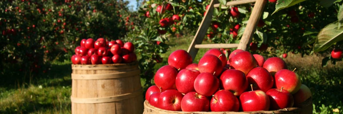 Spätsommer reifes Obst verarbieten