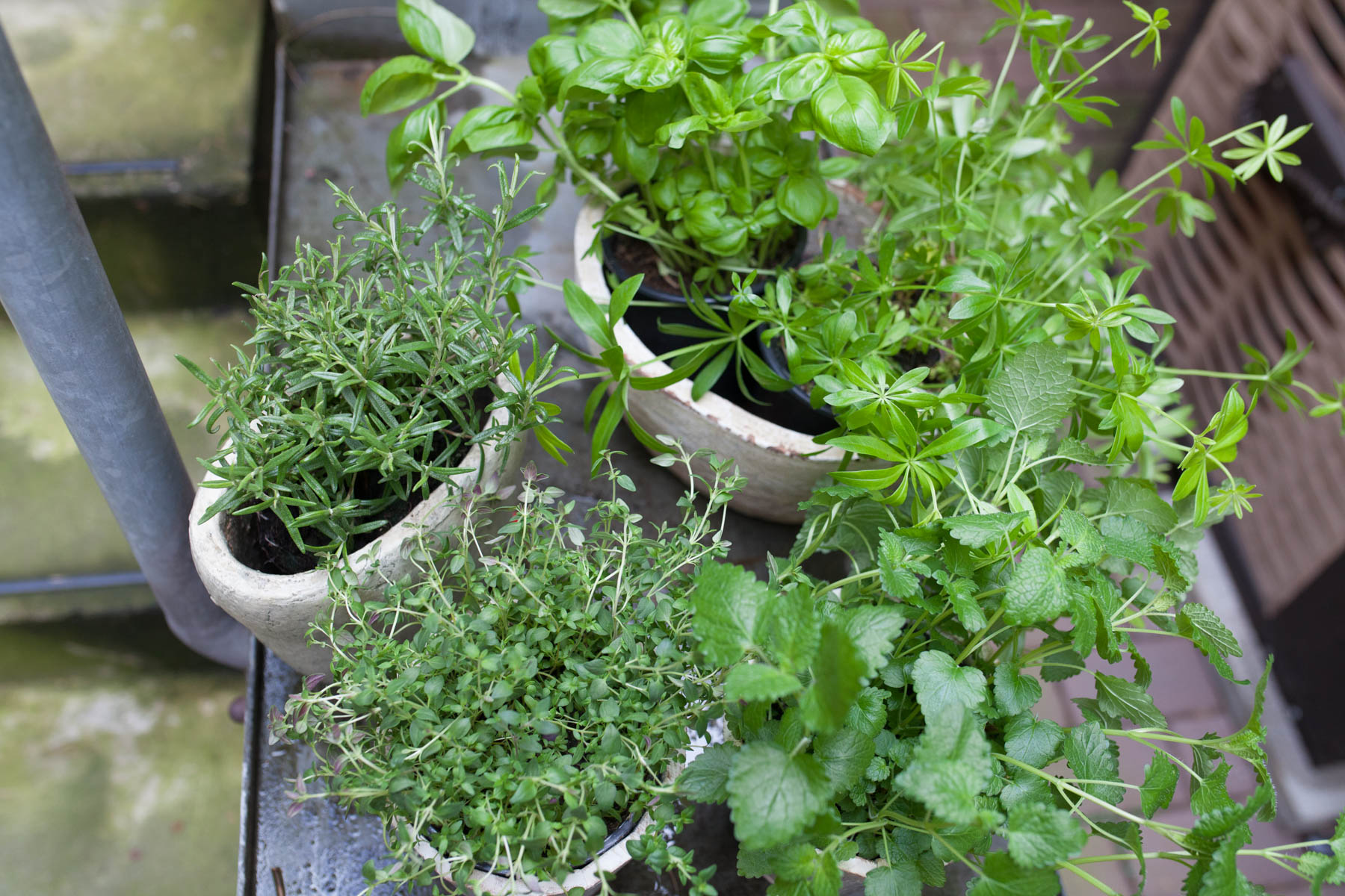 Urban Gardening Kräuter