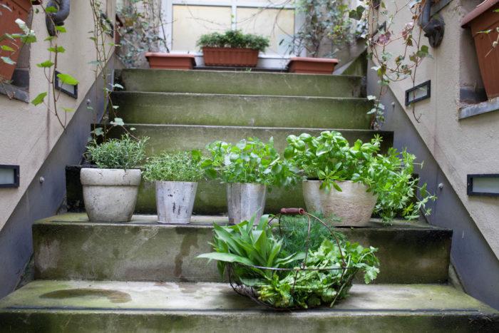 Urban Gardening Kräuter ALvis