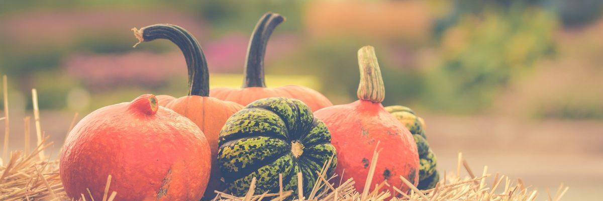Kürbis-Rezept Herbst